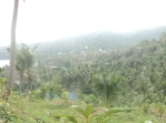 Ko Pha Ngan - Vegetation