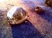 Hamburg: große und kleine Steine im Weg