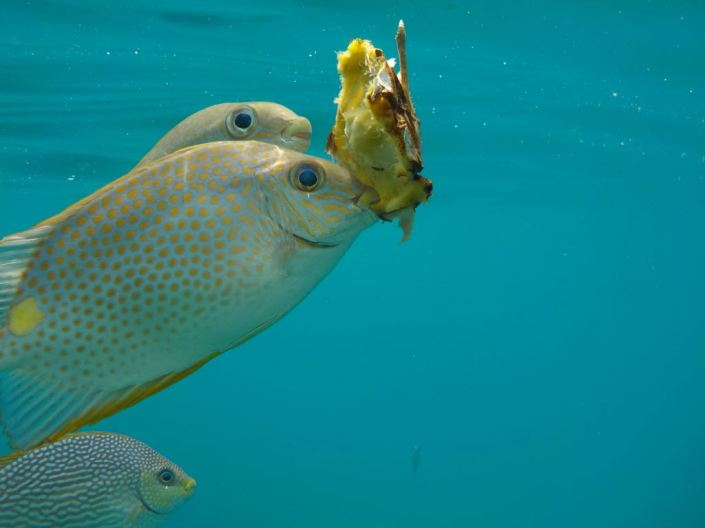 Fisch auf Koh Chang mit Ananas