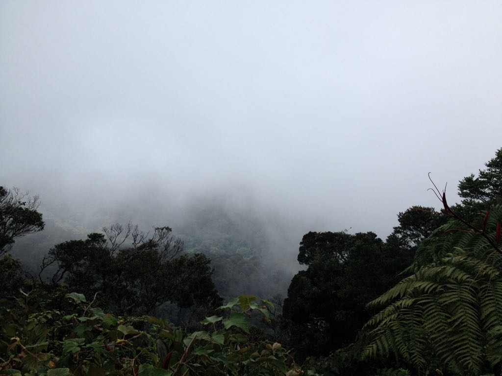 Die Umgebung von Tanah Rata