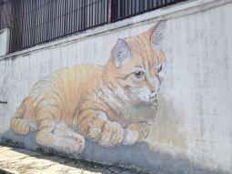 Katze in George Town