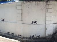 Katzen in George Town
