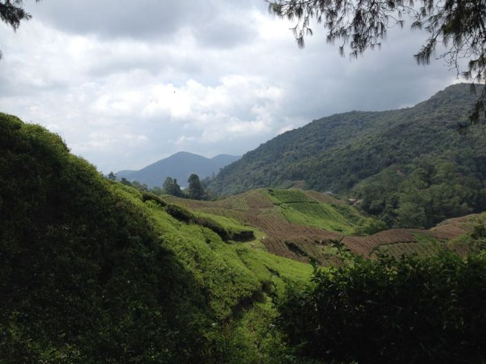 Teeplantagen nahe Tanah Rata